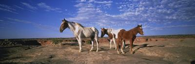 Wild Ponies Nm USA