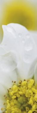 Petal Perfection - Detail by Wild Wonders of Europe