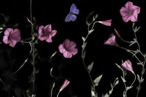 Serene Flutter by Wild Wonders of Europe