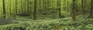 Woodland Melody by Wild Wonders of Europe