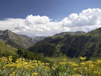 https://imgc.allpostersimages.com/img/posters/wildflowers-and-mountains-near-cinnamon-pass-uncompahgre-national-forest-colorado_u-L-P91IXB0.jpg?p=0