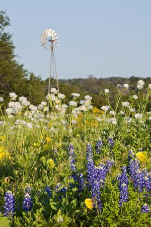 https://imgc.allpostersimages.com/img/posters/wildflowers-and-windmill-in-texas-hill-country-texas-usa_u-L-PN714S0.jpg?p=0