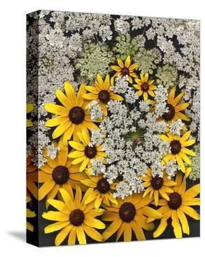 Wildflowers black eyed Susans Queen Ann Lace