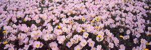Wildflowers Galveston Tx USA