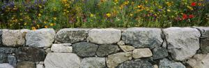 Wildflowers Growing near a Stone Wall, Fidalgo Island, Skagit County, Washington State, USA