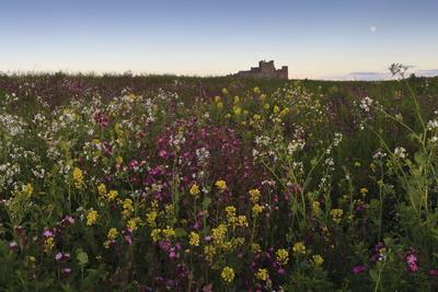 https://imgc.allpostersimages.com/img/posters/wildflowers-in-the-evening-beneath-bamburgh-castle-bamburgh-northumberland-england_u-L-PQ8N5Z0.jpg?p=0