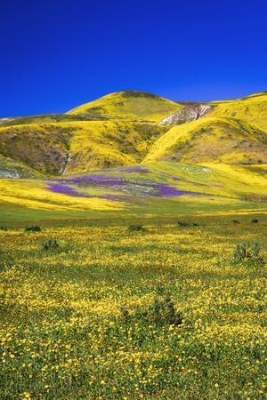 https://imgc.allpostersimages.com/img/posters/wildflowers-in-the-temblor-range-carrizo-plain-national-monument-california-usa_u-L-Q1H21N40.jpg?artPerspective=n