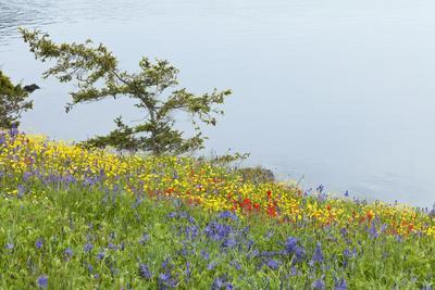 https://imgc.allpostersimages.com/img/posters/wildflowers-overlooking-ocean-yellow-island-washington-usa_u-L-PN72RO0.jpg?p=0
