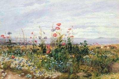 https://imgc.allpostersimages.com/img/posters/wildflowers-with-a-view-of-dublin-dunleary_u-L-PLFQL50.jpg?p=0