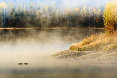 https://imgc.allpostersimages.com/img/posters/wildfowl-on-snake-river-surrounded-by-a-cold-dawn-mist_u-L-PQ8TLZ0.jpg?p=0