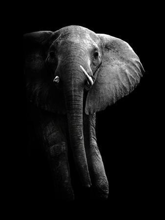 Elephant! by WildPhotoArt