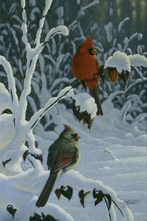 Cardinals and Brambles