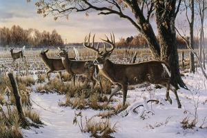 Cautious Crossing - Whitetails by Wilhelm Goebel