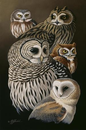 Eyes of the Night - Owls