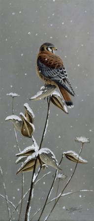Gentle Snowfall - Kestrel