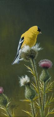 Goldfinch on Thistle by Wilhelm Goebel