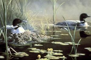 Nesting Loons by Wilhelm Goebel