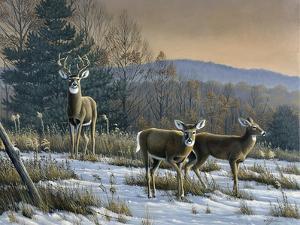 Prime Time - Whitetail Deer by Wilhelm Goebel