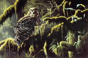 Spirit of Ancient Forests - Spotted Owl by Wilhelm Goebel