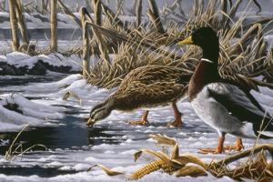 Spring Thaw - Mallards by Wilhelm Goebel
