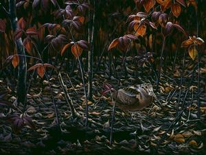 The Woodcocks World by Wilhelm Goebel