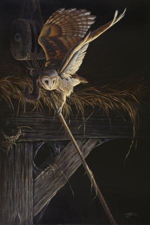 Tight Rope Barn Owl