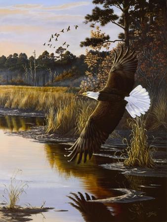 Wings of Autumn - Bald Eagle