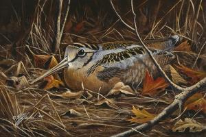 Woodcock in Hiding by Wilhelm Goebel