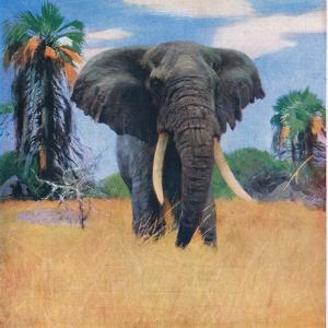 African Elephant in His Native Haunts by Wilhelm Kuhnert