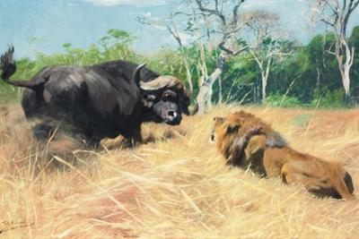Buffalo and Lion before the Fight by Wilhelm Kuhnert