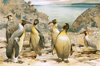Giant Penguins by Wilhelm Kuhnert