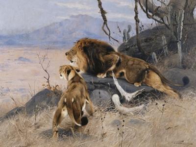 Lion and Lioness; Lowe Und Lowin by Wilhelm Kuhnert
