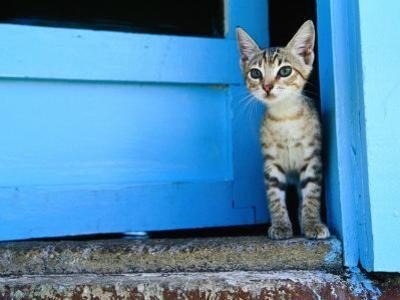 Kitten Standing in Doorway, Apia, Samoa by Will Salter