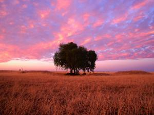 Sunset Over Lone Tree in Paddock, Rochester, Australia by Will Salter