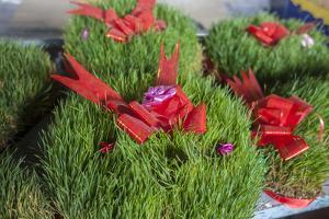 Sabzeh, or Wheat Grass, Is Sold for Nowruz, the Feast of the New Year by Will Van Overbeek