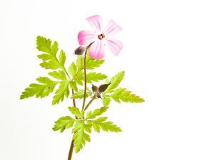 Delicate Flower by Will Wilkinson
