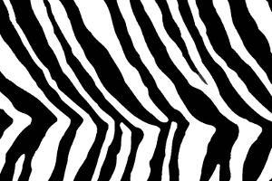 Black And White Animal Print by Willee Cole