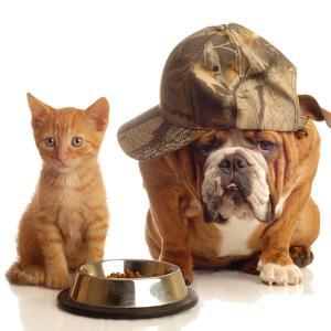 Bulldog and Cat at Food Dish Together by Willee Cole