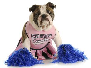 Cheerful Dog - English Bulldog Dressed Up Like A Cheerleader With Pompoms by Willee Cole