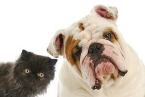 Dog And Cat by Willee Cole