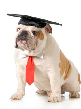 Pet Graduation - English Bulldog Wearing Graduation Cap And Red Tie by Willee Cole