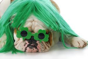 St Patricks Day Dog by Willee Cole