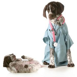 Veterinary Care - German Shorthaired Pointer Dressed as a Veterinarian Looking after Sick Puppy by Willee Cole