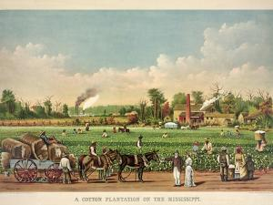 A Cotton Plantation on the Mississippi, Pub. 1884 by William Aiken Walker