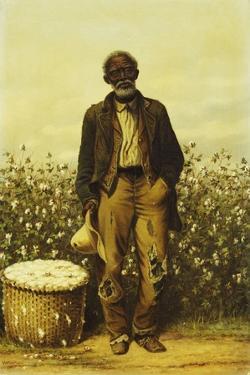 The Old Cotton Picker by William Aiken Walker