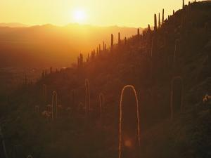 Sunset over Tucson Mountain State Park by William Allen