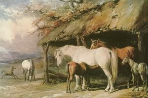 Mares and Foals, 19th Century by William Barraud