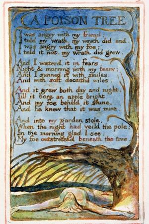 A Poison Tree: Plate 49 from Songs of Innocence and of Experience C.1815-26 by William Blake