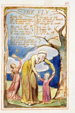 The Fly: Plate 40 from Songs of Innocence and of Experience C.1815-26 by William Blake