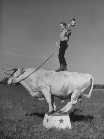 Boy Standing on Shorthorn Bull at White Horse Ranch